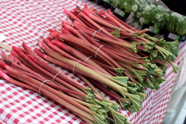 This rhubarb is a crust and two cups of sugar away from becoming pie.